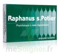Raphanus S.potier Biologique, Bt 12 à Saint-Avold
