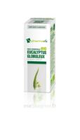 Huile essentielle Bio Eucalyptus Globuleux à Saint-Avold